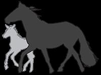 Key Hobumajandus – Eesti Hobune